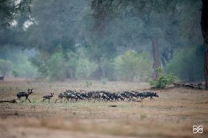Africa Geographic features the declining dynastiesof Mana Pools