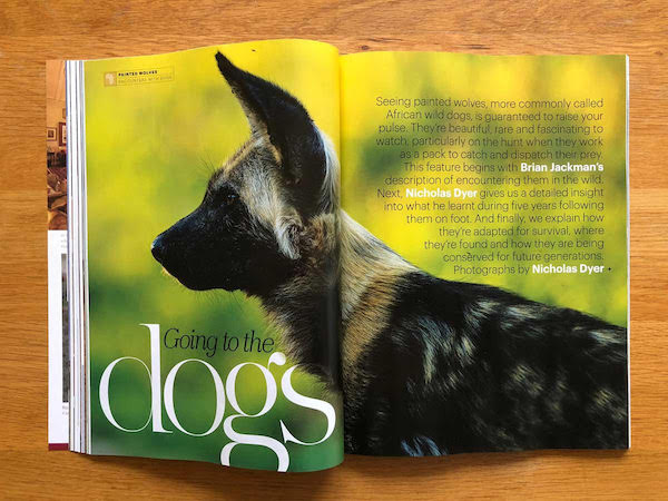 Painted wolves story in the latest Travel Africa Wildlife Special Issue