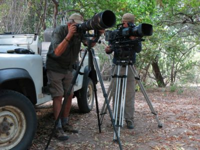 Media attention growing for painted wolves