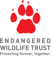Learning in Lockdown – EWT's Wild Chats on Wild Dogs