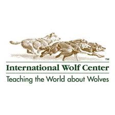 Article on painted wolves in International Wolf Magazine