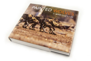 Painted Wolves, a Wild Dog's Life