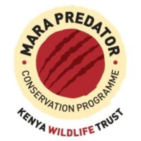 More exciting news on painted wolves from the Mara