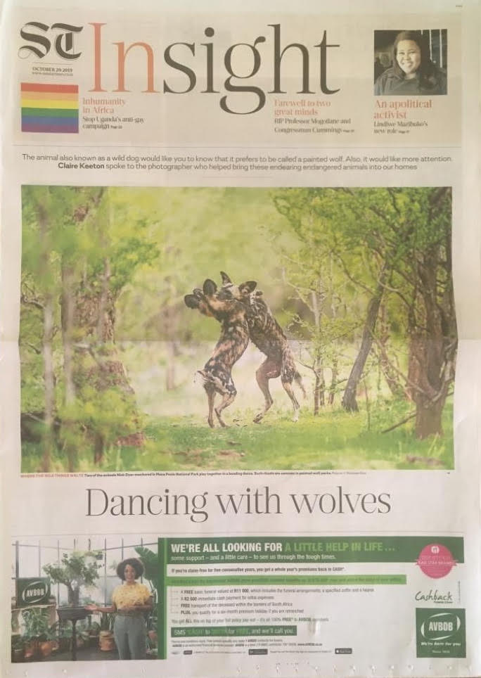 Sunday Times Painted Wolves A Wild Dog's Life Feature