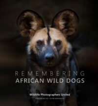 Remembering African Wild Dogs – last chance to pre-order